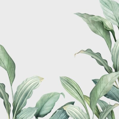 Adesivo Tropical leaves background
