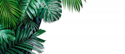 Adesivo Tropical leaves banner on white background with copy space