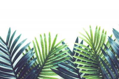Adesivo Tropical leaves foliage plant close up with white copy space background.Nature and summer concepts ideas