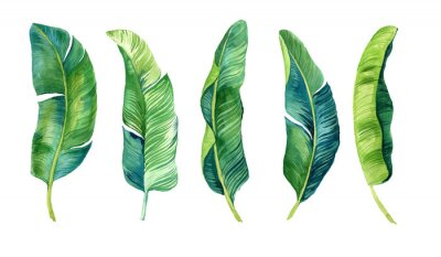 Adesivo Tropical leaves, palm leaves drawn by hand. Set of watercolor illustrations. For fabric, cards, invitations, weddings and other