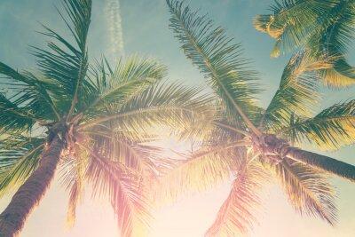 Adesivo Tropical paisagem com palmeiras e céu ensolarado