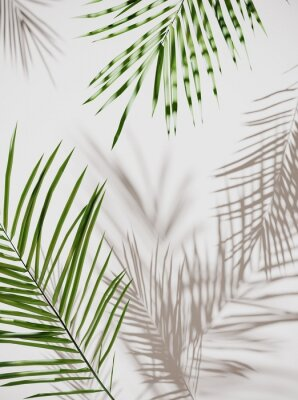 Adesivo Tropical palm green leaves on  light pastel background. Unobtrusive botanical background with shadow on the wall - trend frame, cover, card, postcard, graphic design - 3D, render, illustration.