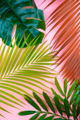 Adesivo tropical palm leaf pink sweet background