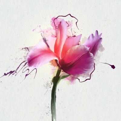 Adesivo Tulipa bonita e brilhante em um fundo branco. Um gênero de plantas bulbosas herbáceas perenes da família Lily