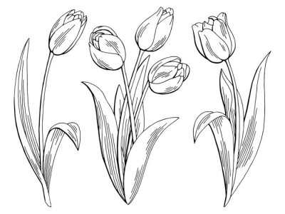 Adesivo Tulipa, gráfico, pretas, branca, isolado, esboço, Ilustração, vetorial