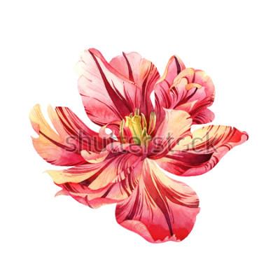 Adesivo Tulipa rosa aquarela isolado no fundo branco