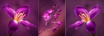 Adesivo Tulipany i Orchidea