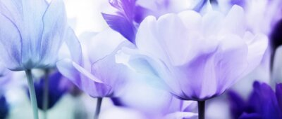 Adesivo tulipas cian violeta ultra leve