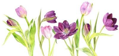 Adesivo Tulipas roxas e cor de aguarela