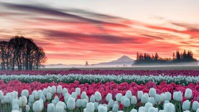 Adesivo um campo de tulipa sob um nascer do sol rosa com uma montanha ao fundo