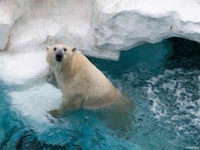 Adesivo Urso polar do norte