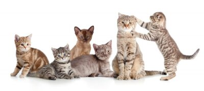 Adesivo vários gatos grupo isolado