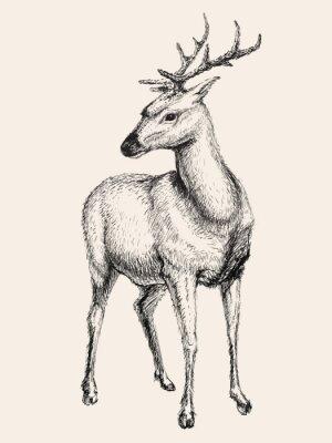 Adesivo Veado, vetorial, Ilustração, mão, desenhado, esboço