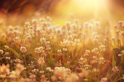 Adesivo verão flores fundo da paisagem sol Rays