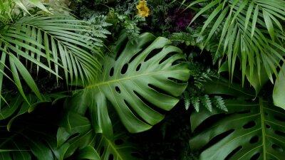 Adesivo Verde, tropicais, folhas, monstera, palma, fern, e, ornamental, plantas, pano de fundo, fundo