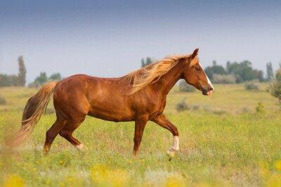 Adesivo Vermelho, cavalo, longo, mane
