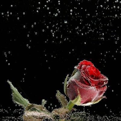 Adesivo Vermelho, rosa, orvalho, gotas, pretas, fundo
