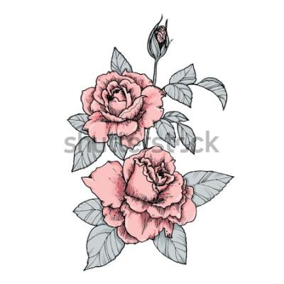 Adesivo Vinheta elegante com rosas cor de rosa. Mão desenhada ilustração vetorial isolado no estilo vintage