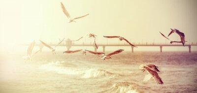 Adesivo Vintage retro estilizado foto de uma gaivota, efeito de filme antigo.