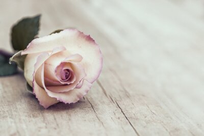 Adesivo Vintage Rosa