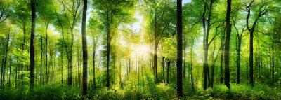 Adesivo Waldpanorama com raios de sol