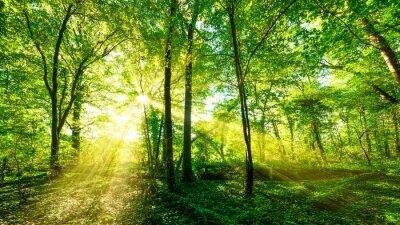 Adesivo Waldpanorama na luz do sol dourado