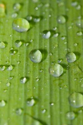 Adesivo wate rdrops em uma folha verde