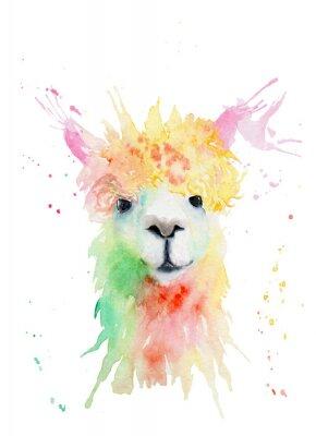 Adesivo watercolor drawing of an animal - alpaca, drops, splashes