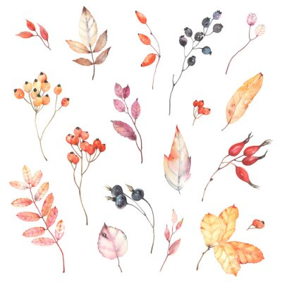 Adesivo Watercolor set of branches with berries dog rose, rowan and colorful leaves. Autumn illustration isolated on white background, decoration collection for your design.