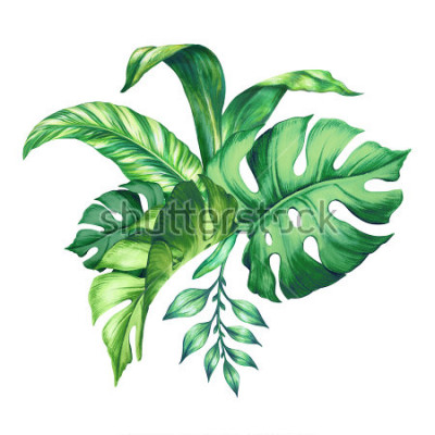 Adesivo watercolor tropical green leaves, isolated on white background
