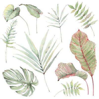Adesivo watercolor tropical plants set.