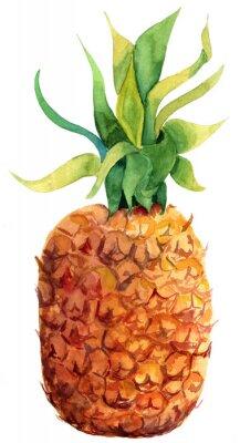 Adesivo Watercolour do abacaxi no fundo branco