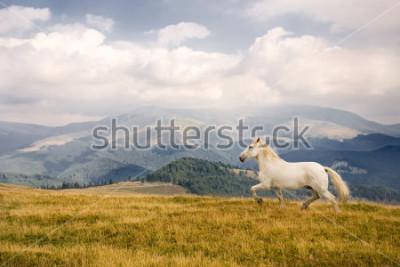 Adesivo White horse