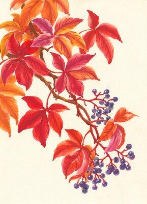 Adesivo Дикий виноград осенью, красные листья и ягоды, живопись.