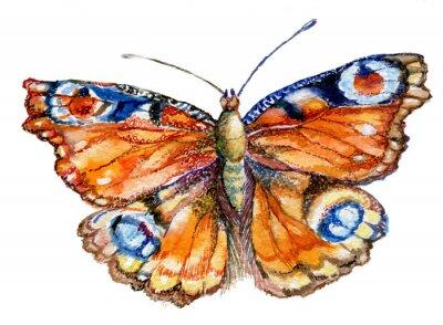 Adesivo Бабочка акварель, графика, насекомое, рисунок,