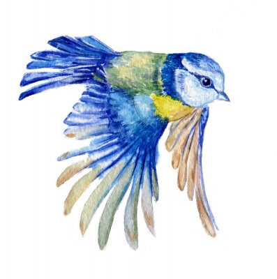 Adesivo птица синица