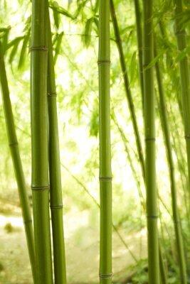 Fotomural 2 talos de bambu