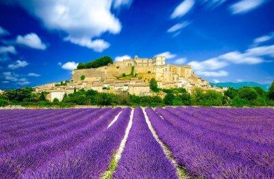 Fotomural A alfazema coloca em France - Provence