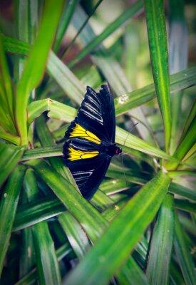 Fotomural A borboleta bonita senta-se em uma grande folha