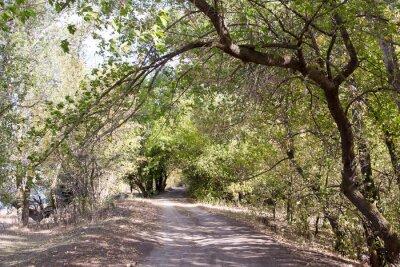 Fotomural A estrada na floresta
