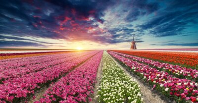Fotomural A estrada que conduz aos moinhos de vento holandeses do canal em Rotterdam. Holanda. Países Baixos