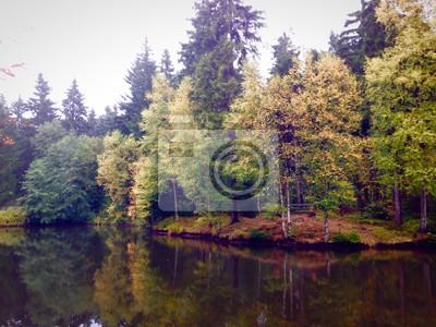 Fotomural A floresta decídua pelo lago