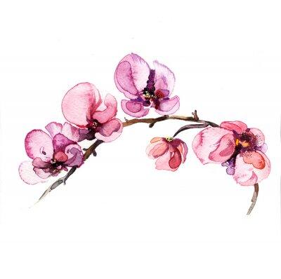 Fotomural a orquídea flores da aguarela isolado no fundo branco