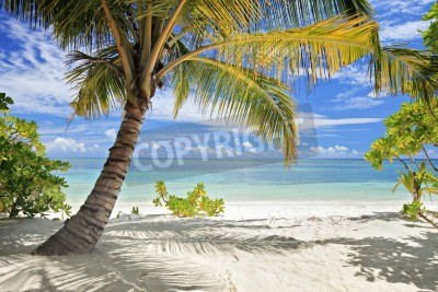 Fotomural A scene of palm trees and sandy beach in Maldives island