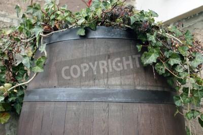 Fotomural A videira cresce a partir do barril de madeira escura