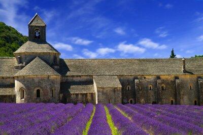 Fotomural Abadia de Senanque e linhas florescendo flores da alfazema. Gordes, Lu