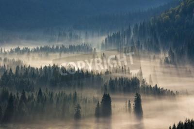 Fotomural Abeto, árvores, prado, baixo, vontade, coniferous, floresta, nebuloso, montanhas