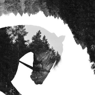Fotomural Abeto floresta dentro do cavalo em arte, multiexposição