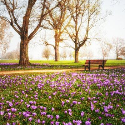Fotomural Açafrões de primavera