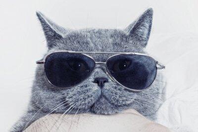 Fotomural Açaime engraçado do gato cinzento em óculos de sol